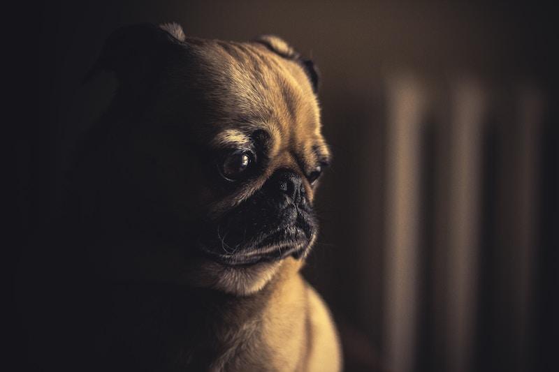 Dlaczego czuję smutek? Często, bardzo mi smutno… Przyczyny smutku i jak sobie z tym radzić