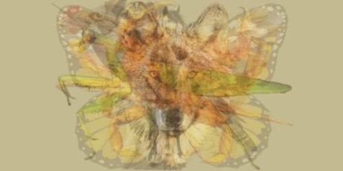 Pierwsze zwierzę mocy, które zobaczysz, ma dla Ciebie ciekawą informację