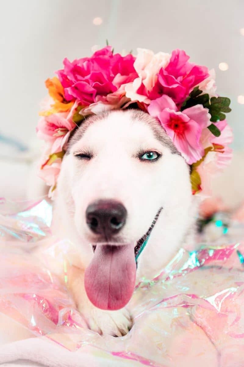 Horoskop Chiński 2018, czyli Rok Ziemskiego Psa – przepowiednie dla każdego znaku